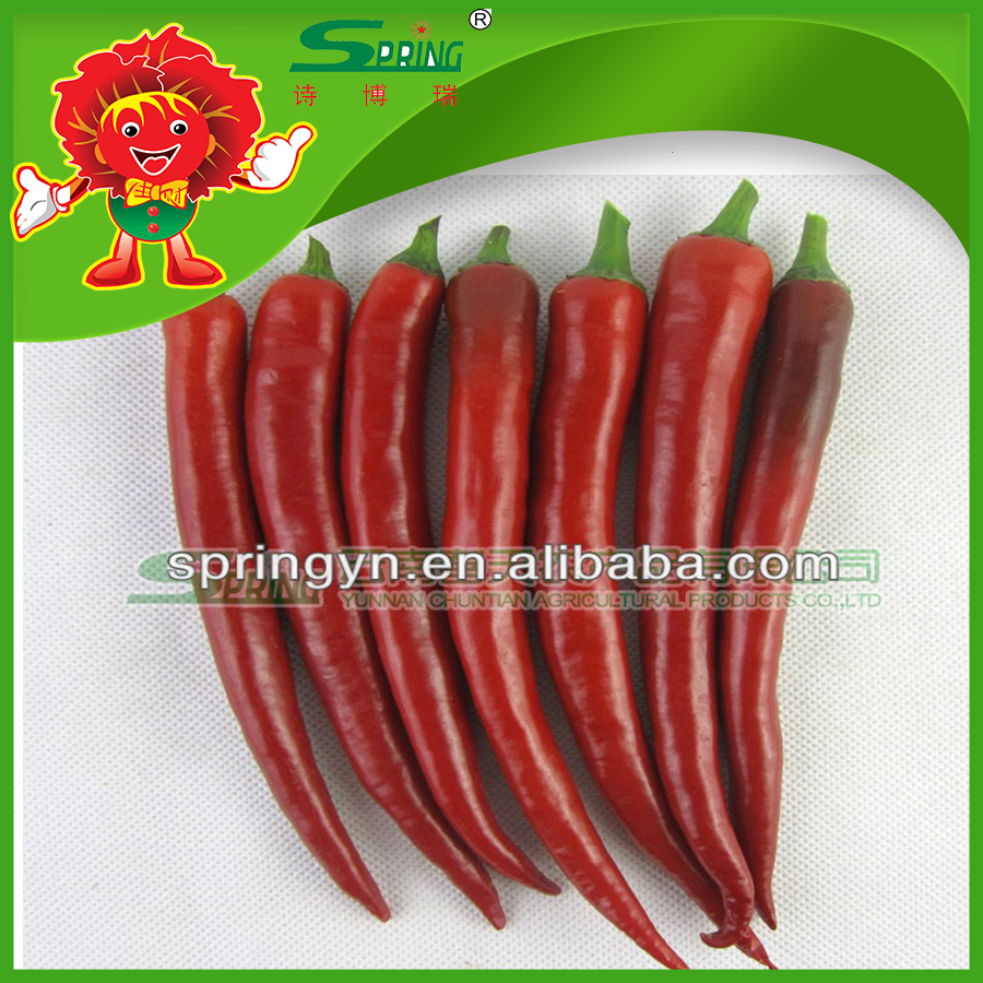 Wholesale commom cultivation fresh green chilli