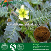 Natural tribulus terrestris plant extract