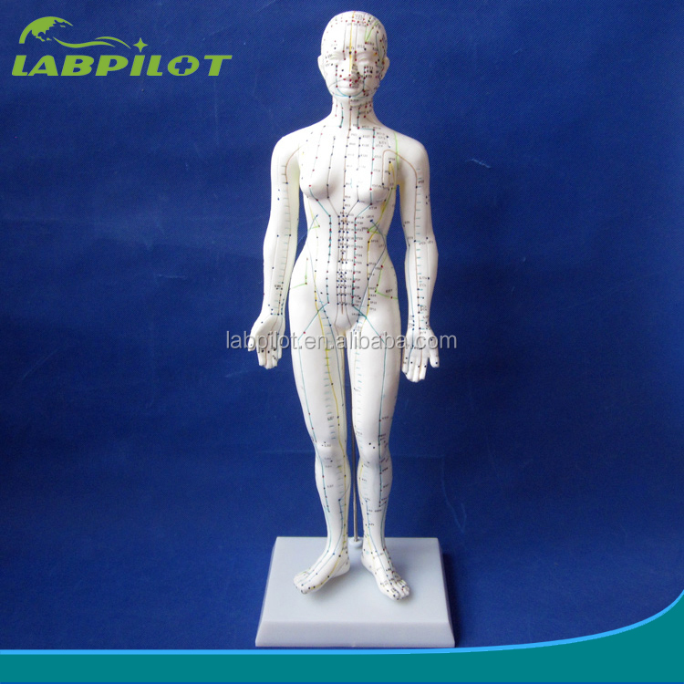 48CM Human Acupuncture Model Female, body massage Model