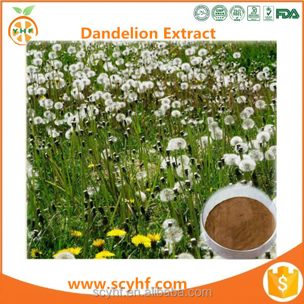 High Quality Organic Dandelion P.E. Dandelion Root Extract