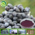 Pure bilberry fruit extract powder