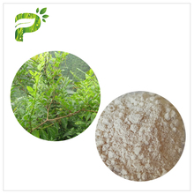 Hot sale best Liver protection ampelopsis grossedentata extract dihydromyricetin
