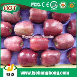 2015 New Crop Red Fresh Apples Price