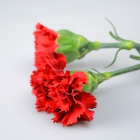 Cheap Mastor multi-colored fresh cut carnations