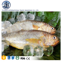 Wholesale Best Pacific Frozen Seafood Striped