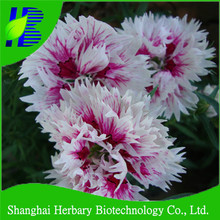 2016 Hot sale Carnation seeds for sowing