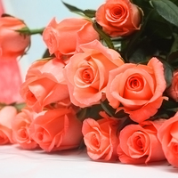 Clean fresh cut rose fresh cut flowers movie star rose hotel decoration from YUNNAN