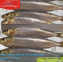 Newly arrival Frozen seafood of whole round Sardine fish