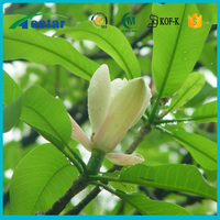 Hot sale plant extract cimicifuga racemose l.nutt extract for sale