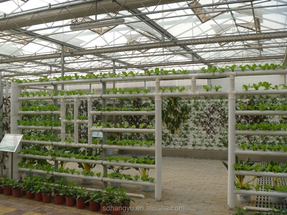 High Quality Mushroom Commercial Greenhouse