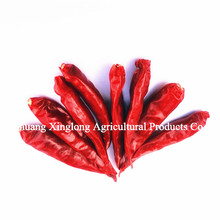 Hot Spicy Dried Chili Red Pepper