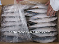 Fish (size: 200-300 mackerel )