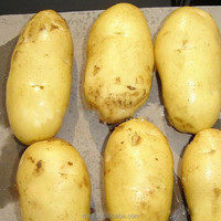 Wholesale Potato for Singapore importers
