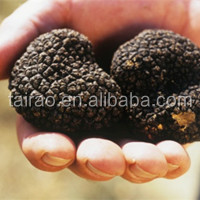 white fresh TRUFFLE exported to Italy