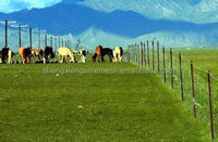 ISO9001 Practical Cattle/Sheep/Horse/Deer Fence Hot Sale in Australia/New Zealand