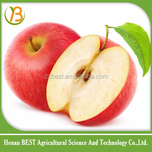 red and green fresh fruit apple at attractive price