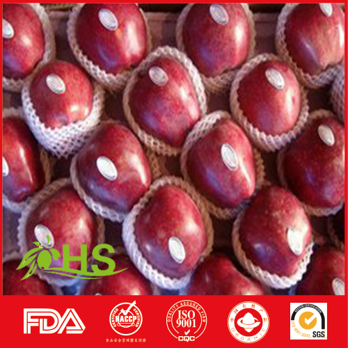 red huaniu apple fresh fruit suppliers from china