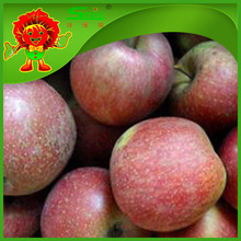Bulk organic red delicious apple for sale