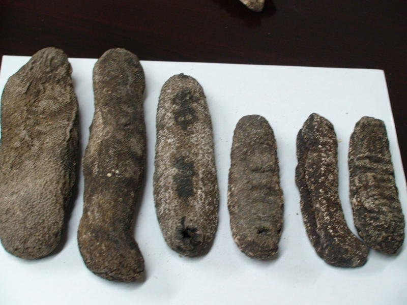 Dried and Frozen Sea Cucumbers