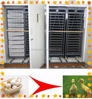 ostrich egg incubator/ poultry transport crate 20000 chicken eggs incubator
