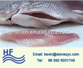 Frozen fresh gutted scaled whole tilapia for sale