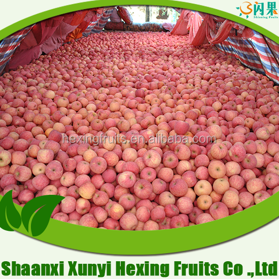 India apples exporter custard apple fruit