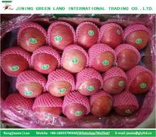 RED QINGUAN APPLE 2016 TO WORLD MARKET FOR SALE