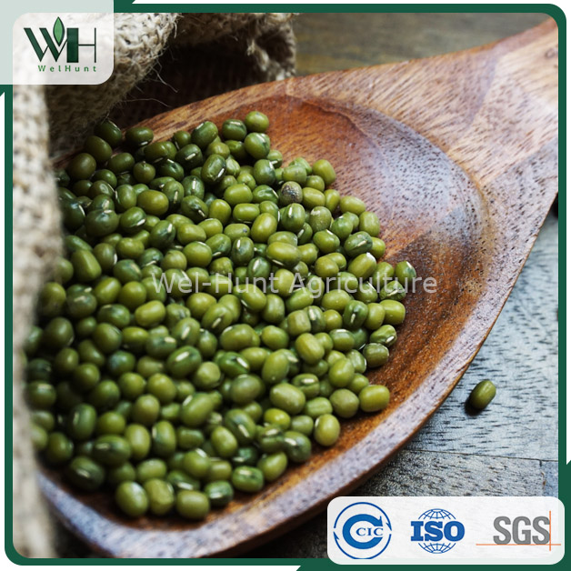 Machine Dressed Green Mung Bean