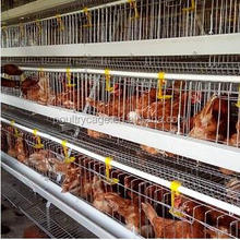 Layer Uganda Layer Farm Chicken Battery Cage For Sale
