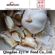 Super Quality Red Garlic export to Indonesia