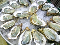 OYSTER FLAVOR/SEASONINGS