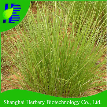 Wholesale Khus grass seedlings with stress resistance