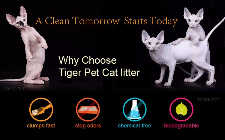Blue Silica Gel Cat Litter Activated Charcoal Bentonite Clay ...