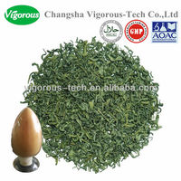 egcg green tea/green tea egcg/egcg powder 98%