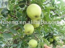 New crop fresh green apple prices