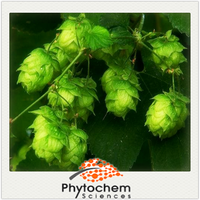 Pure Natural plant flower part Hops Extract