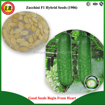 LINONG new bred excellent quality and high yield HYN zucchini F1 hybrid seeds