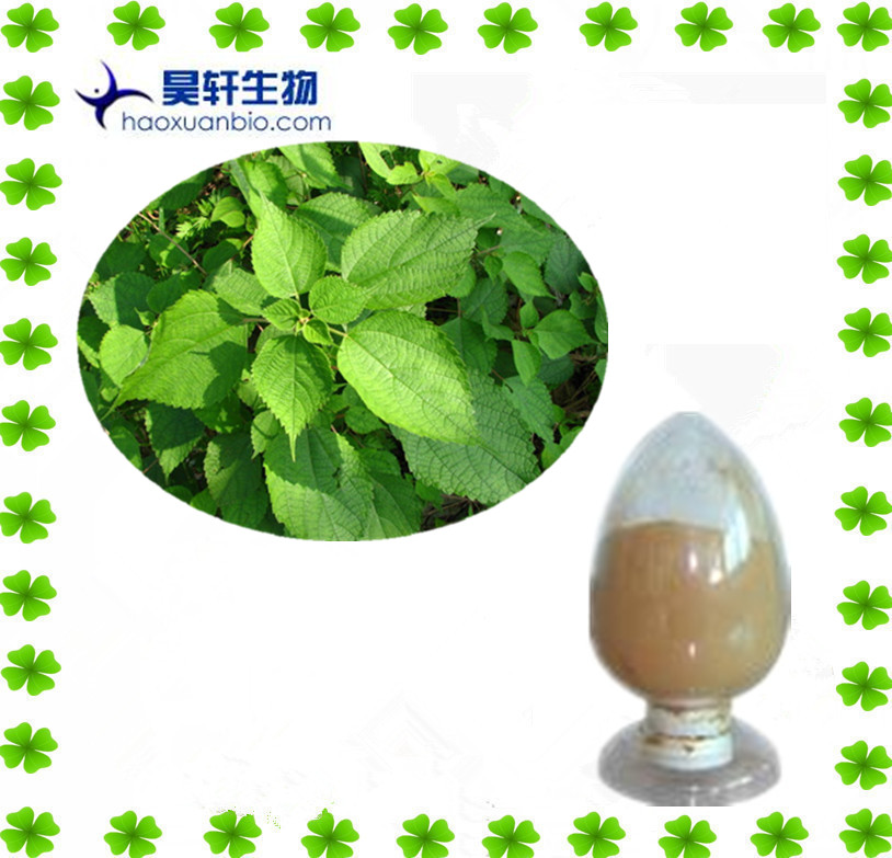 100% Natual Chinese herb Nettle Extract Silica 1.0% Beta-Sitosterols 1.0%
