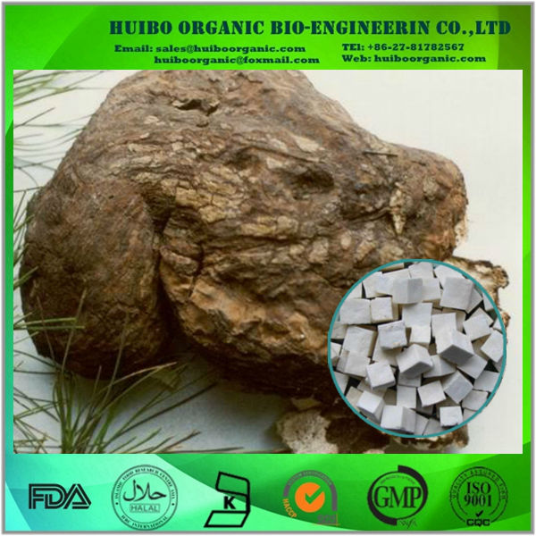 organic indian bread extract / poria cocos extract