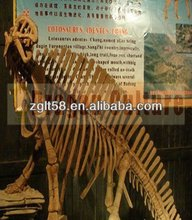 Playground skeleton large dinosaur model
