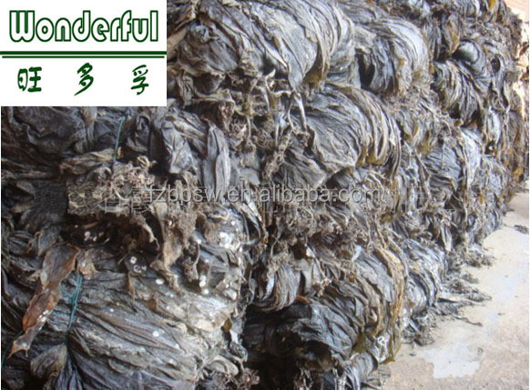 Laminaria japonica kelp,high quality seafood,wholesale dried kelp board