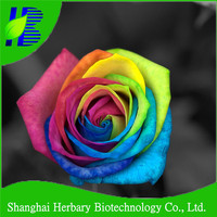 Professional flower seed company supply rainbow rose seeds