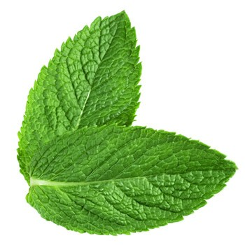 Buy Organic Dried White Mint Extract Powder/Peppermint Powder Oline