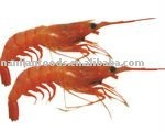 Frozen Red Shrimp(size:30/50,50/70)