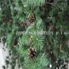 /product-detail/factory-price-wholesale-artificial-pine-tree-palm-tree-plant-60658100380.html
