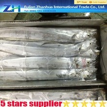Whole round frozen hairtail fish with best price frozen flying fish