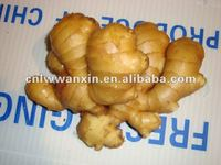 Shandong fat ginger price 2012