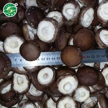 Professional pass ISO9001 frozen vegetable mushroom shiitake with high quality