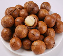 Raw and Roasted Macadamia nuts Chinese Origin