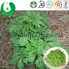 99% Artemisinin Virgate Wormwood Extract as herb medicine